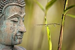 ― Buddha ―